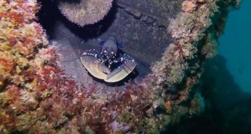 Inmersión emisario submarino